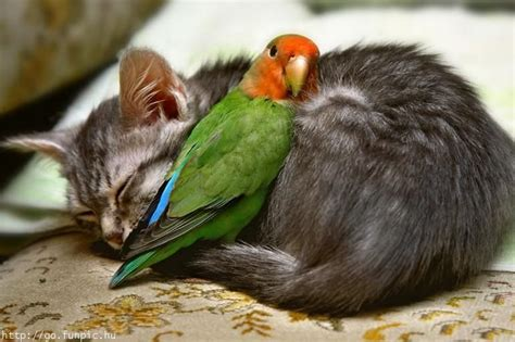 ouch outrageous obnoxious  odd funny odd couples cats