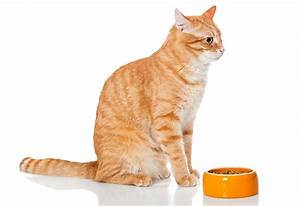 5 Signs Of Kidney Disease In Cats