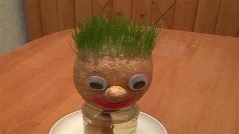 wie lange braucht gras zum wachsen osnabr cks studenten