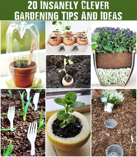 20 insanely clever gardening tips and ideas shtf
