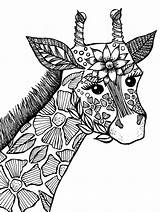 Coloring Pages 1000 Adult Giraffe Printable Getcolorings sketch template