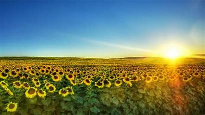 Ukraine 1152 2048 Tall Wide Sommer Wallpapers