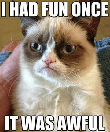 Grumpy Cat Meme I Had Fun Once - anchor loses it in grumpy cat interview stuff co nz