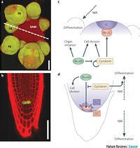 walls  tumours  plants   develop cancer