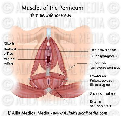 alila medical media female reproductive system images