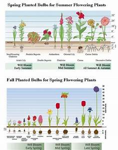 How To Plant A Bulb With A Drill