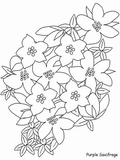 Coloring Flowers Pages Easily