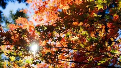 Trees Foliage Autumn Resolution Nature Published June