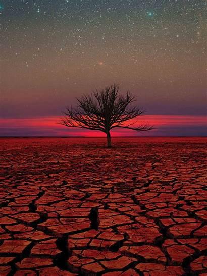 Desert Sunset Mobile Lenovo Wallpapers Tree Backgrounds