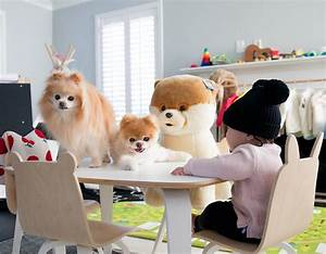 Boo the World's Cutest Dog Makes $20,000 a Week ...