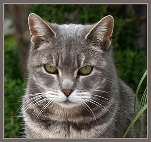 The warrior cats: Lightningclan