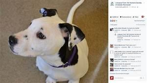 Hunde Größe Berechnen : dieser s e hund ist mit einem selfie am ohr geboren worden ~ Themetempest.com Abrechnung