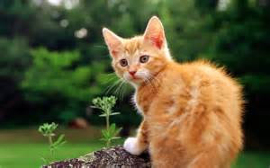 cat photos cats animals wallpapers and images hd photos gallery