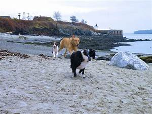 happy tails unleashed 5 dog friendly beaches near With dog friendly stores near me