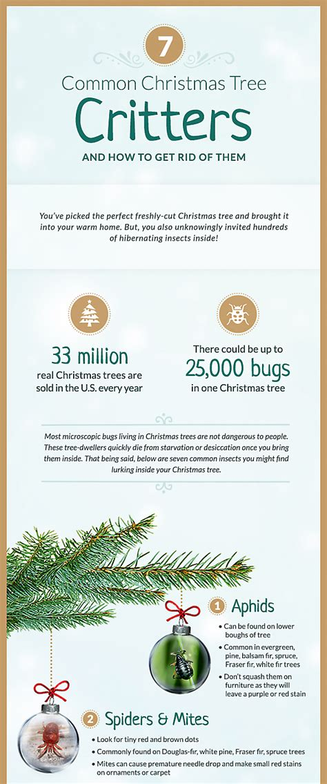 black bugs on christmas tree common tree bugs and how to get rid of them