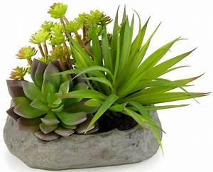 Zimmerpflanzen Auf Rechnung : home affaire kunstpflanze succulente auf stein otto ~ Themetempest.com Abrechnung