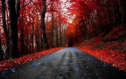 Nature Maple Road Forest Background 4k Wallpapers