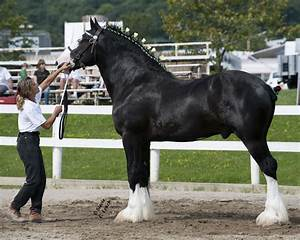The world's largest horse wallpapers and images ...