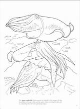 Cuttlefish Coloring Pages Getcolorings Coral Reef Printable sketch template