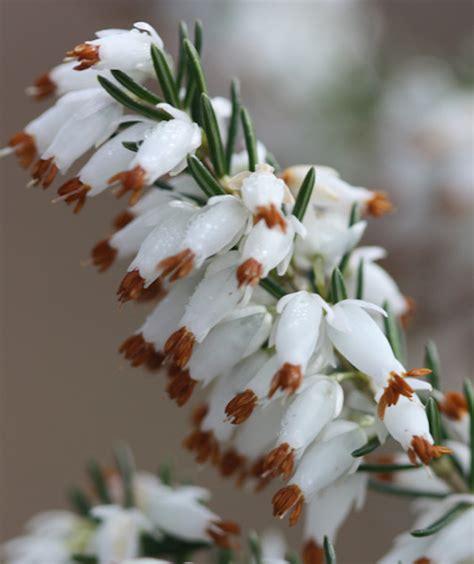 Top 10 Winter Plants To Brighten Up Your Balcony Top