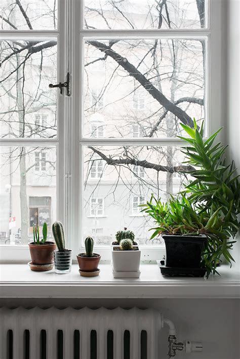 Small Window Plants by 15 Small Windowsill Plants That Will Impress You
