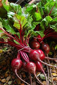 Stirway to heaven: The Benefits of Beautiful Beetroots!