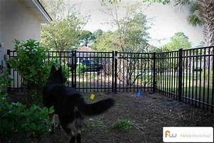 Fences for dogs for Fenceless dog
