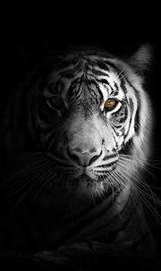White Tiger Wallpaper For Android Phone in 2020 | Tiger ...