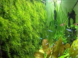 Idee Decoration Aquarium : mur ou poster de fond en mousse ~ Melissatoandfro.com Idées de Décoration