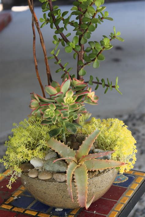 515 best images about mis cactus bellos misteriosos on