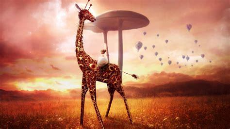 Giraffe Dream Wallpapers | Wallpapers HD