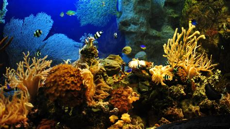 Aquarium Wallpaper Animated Free - desktop hd fish aquarium animated wallpapers free