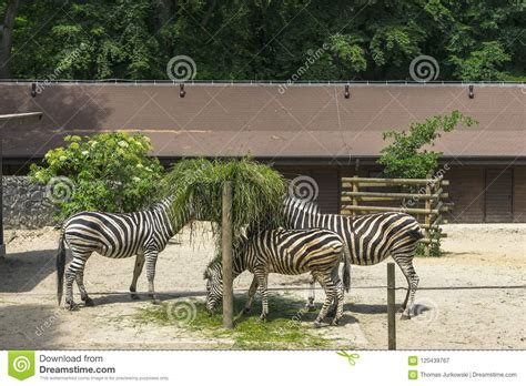 zoo europe wild animals funny