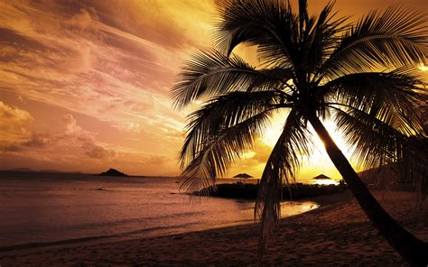 Landscape, Sunset, Beach, Palm Trees, Nature Wallpapers Hd