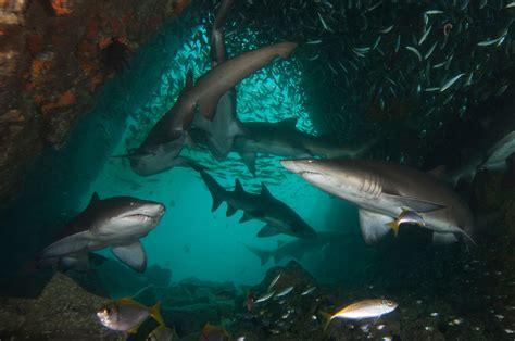 underwater photographer richard smiths gallery