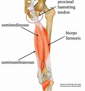 Upper Hamstring Tendinopathy Treatment