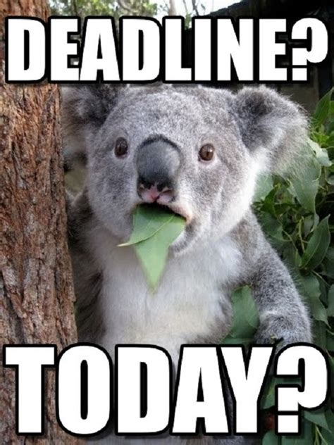 Due Date Meme - every procrastinator will totally relate to these funny deadline memes