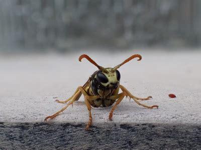 mäuse im haus was tun wespen in der wohnung was tun kleine fliegen in der