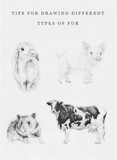 sketches  animals ideas  pinterest pencil