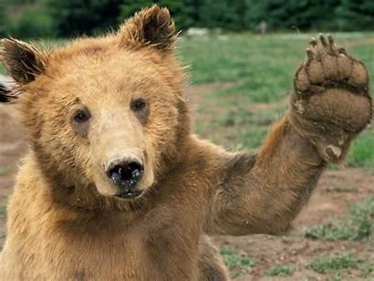 Bear Medicine Hello Power Waving Introspection Gimmie