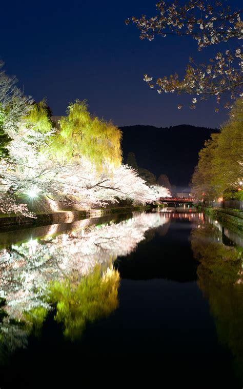 Jeffrey Friedls Blog Evening Cherry Blossoms And Some