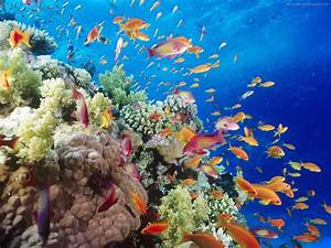 underwater sea animal creatures, plants, pictures HQ ...