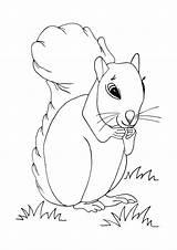 Coloring Squirrel Printable Allfreekidscrafts Colouring Preschool Fairy sketch template