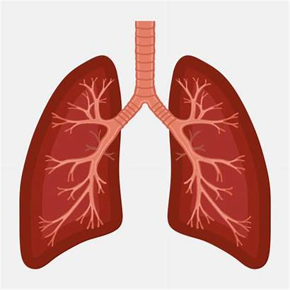 Lung Respiratory Human Diagram Anatomy Cancer Illness