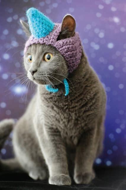 unicorn cat hat cute cats  hats