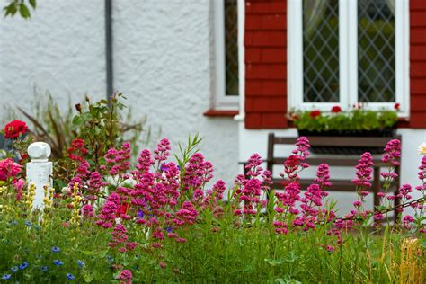 Flowers In Cottage Garden Free Stock Photo-public Domain