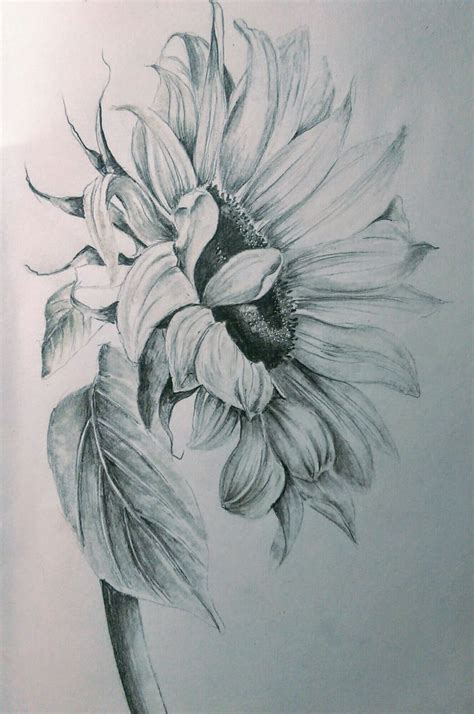 Pencils Coloring Pages Sunflower Tattoos Ink Pen