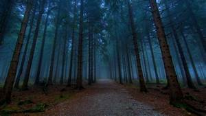 Dark Pine Forest Trees Wallpaper | Beautiful Planet ...