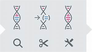 Genome Editing - Breeding Methods