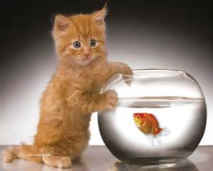fish for cats cat and fish cats picture